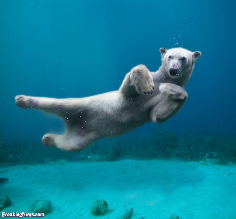 Funny-Swimming-Polar-Bear